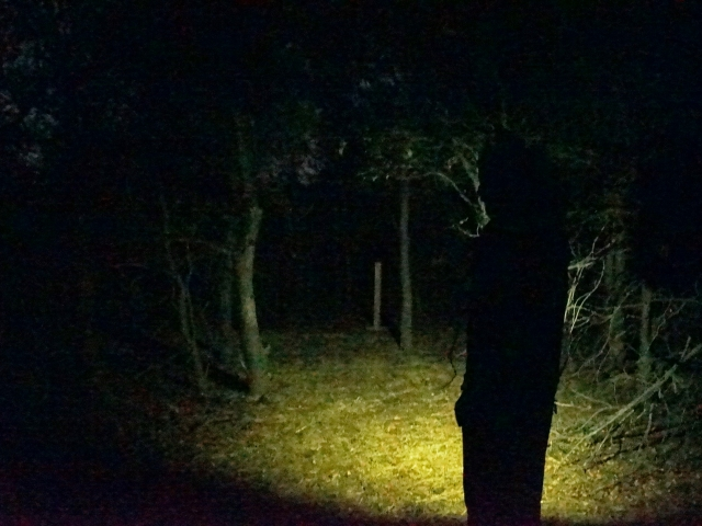 Wooded Haunted Trail